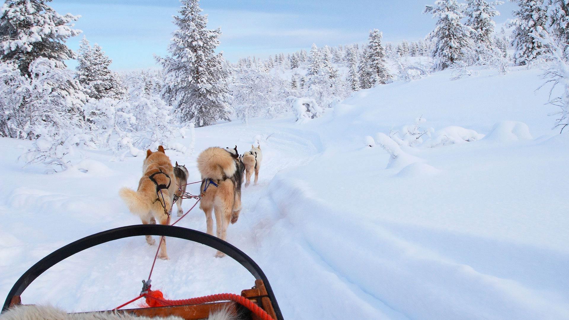 lapland a finnish lapland rejseguide.